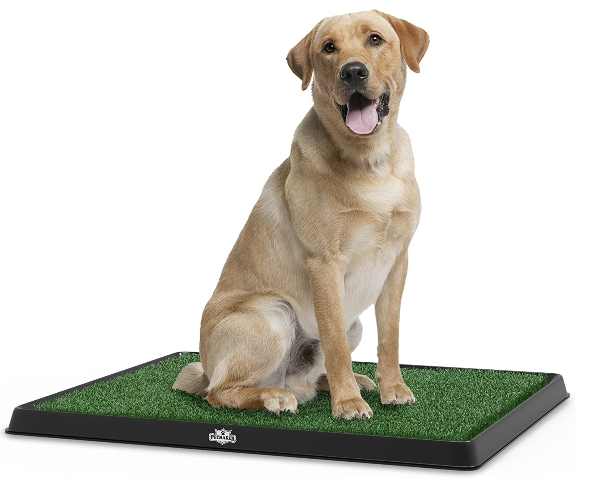A dog posing on the mat