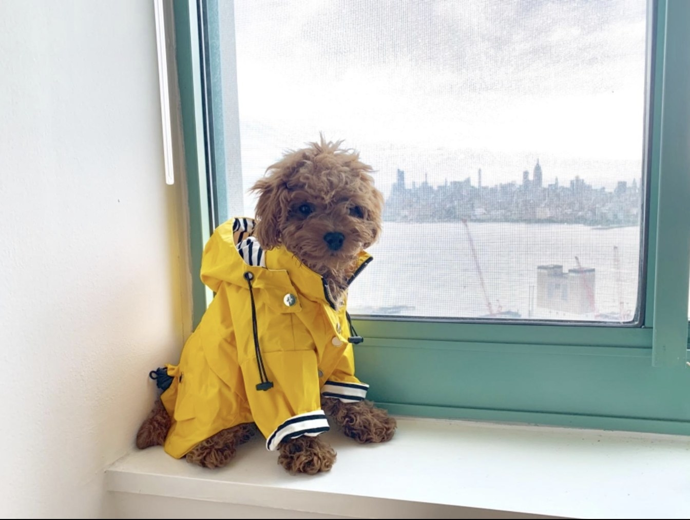 A very cute dog in a yellow raincoat
