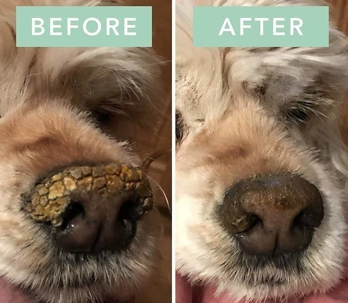 On the left, a dog's nose looking chapped, and on the right, the same dog's nose looking less chapped after using the soother stick