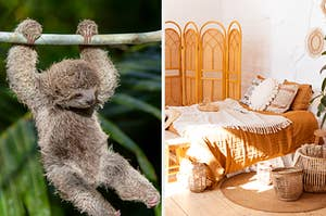 On the left, a baby three-toed sloth swings from a tree branch, and on the right, a sunny bedroom with a big bed, wicker baskets, and a rattan screen