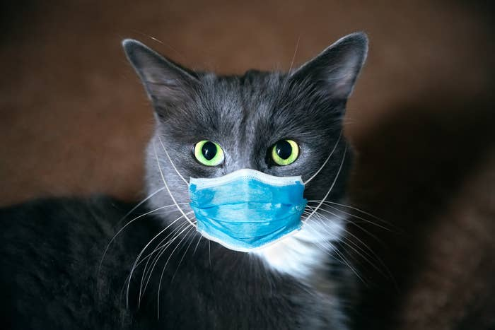 A cat with big eyes has a medical face mask over its nose and mouth