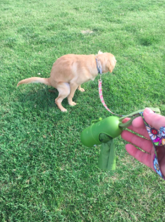 Reviewer shows hand holding leash with green leak-proof dispenser and baggies while taking their dog out for a walk