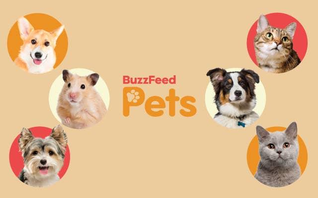 BuzzFeed Pets logo