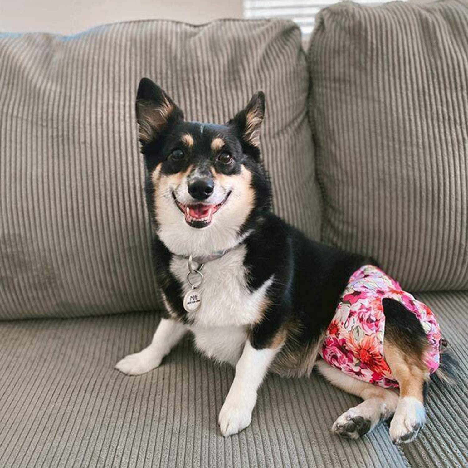 A dog wearing a floral doggy diaper
