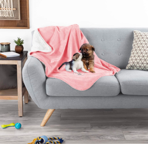 Kitten and puppy cuddle on a waterproof pink blanket placed on a couch