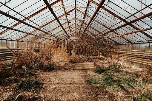 old greenhouse with dead plants and rusted beams