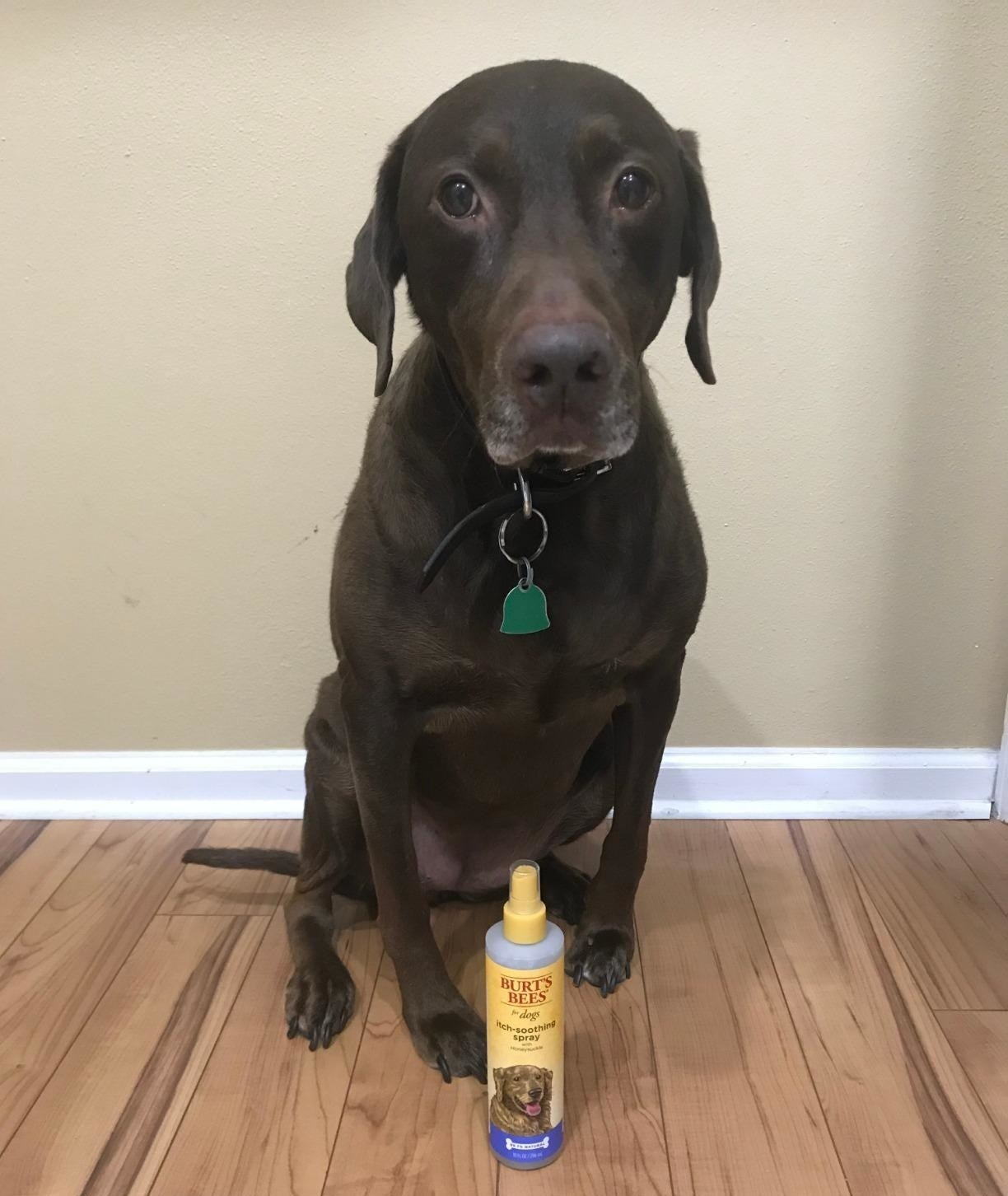 Reviewer's dog sitting next to the spray bottle