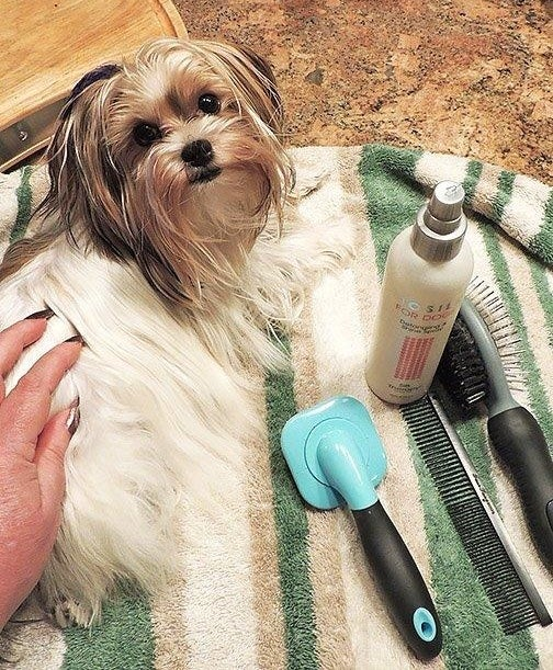 Reviewer's dog next go the spray and a few brushes