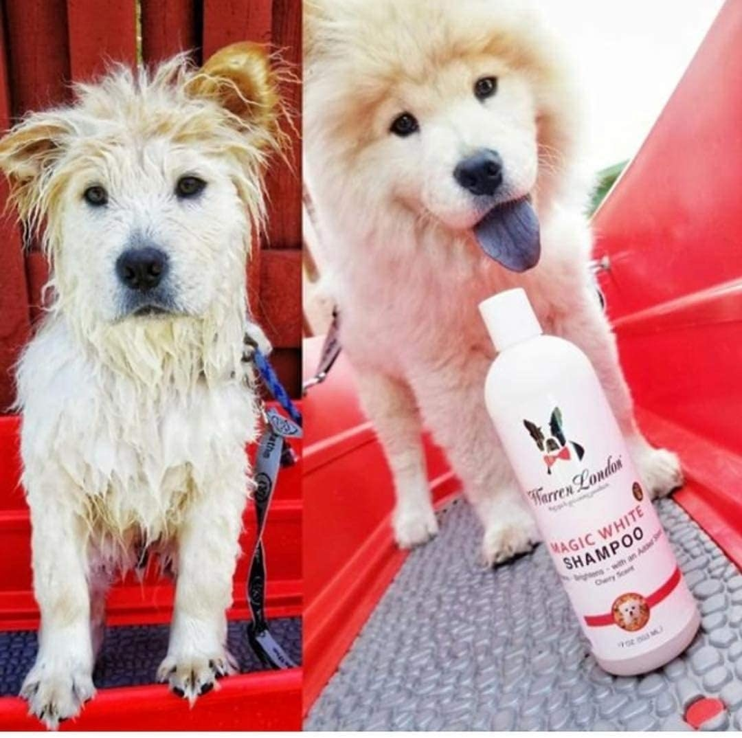 A before-and-after of a reviewer's dog getting washed and then looking fluffy and bright