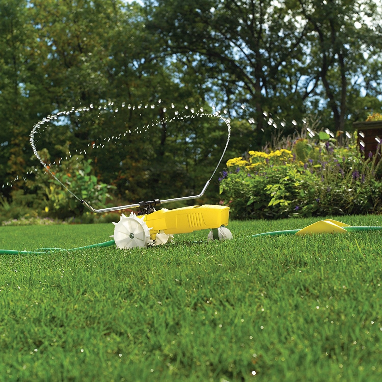 A three-wheeled yellow sprinkler attached to a hose spraying water