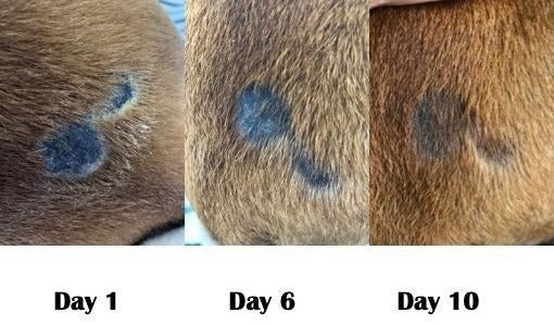 reviewer photo of day 1, day 6, and day 10 showing dogs bumps gradually decreasing