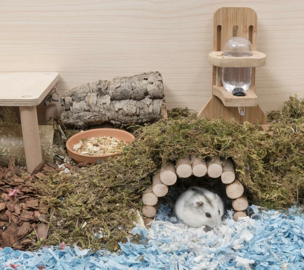 Hamster under wooden bridge made from sticks covered with greenery