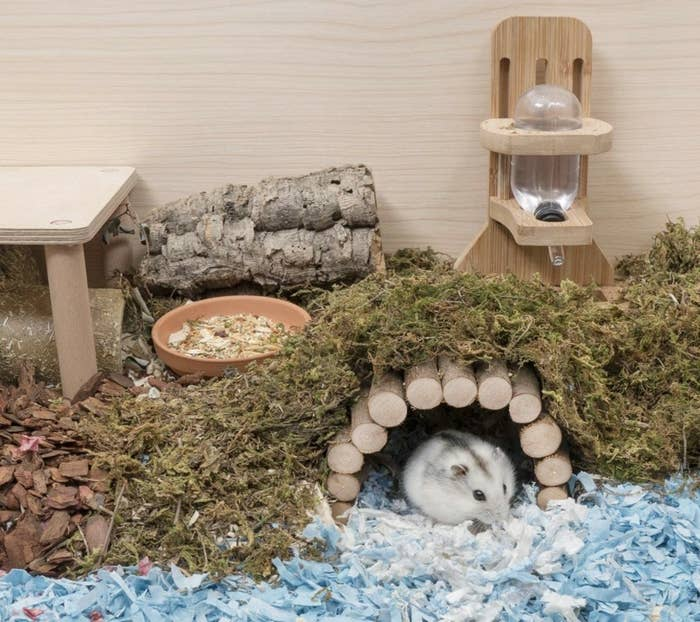 A white and gray hamster under a wooden bridge made from sticks covered with greenery