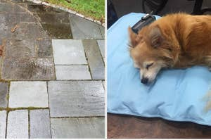 A before and after of grimy stone tiles that have been powerwashed; a small dog lays on a blue bed