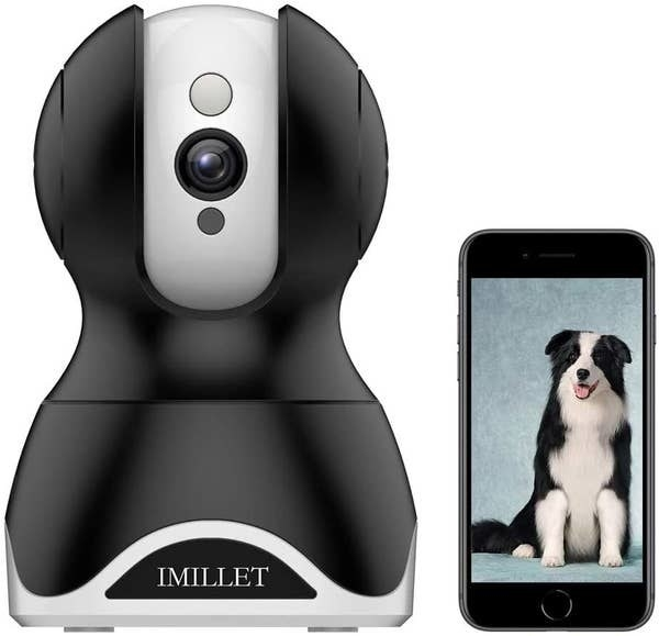 The dog camera and a cell phone displaying a photo of a large Collie mix