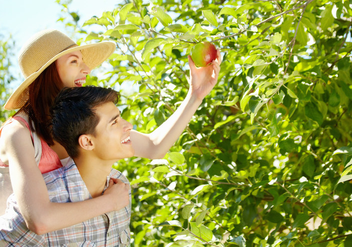 Couple, man and woman, picking apples.
