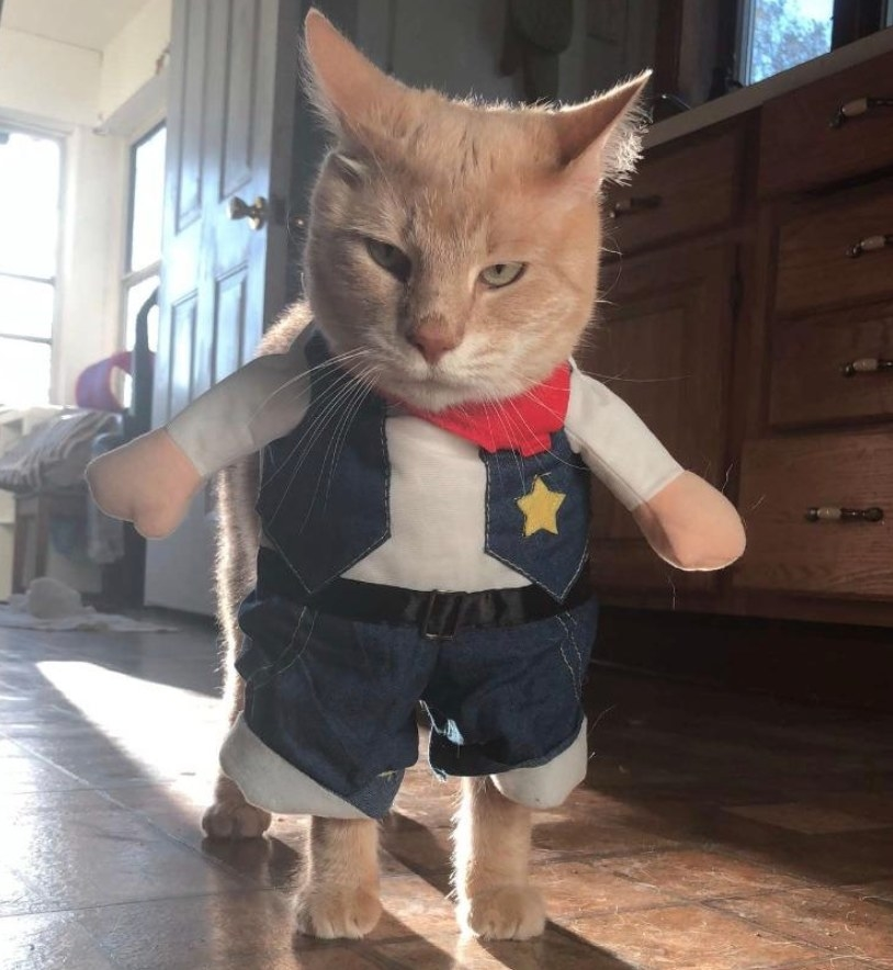 A cat wearing a denim-based sheriff costume with a red bandana and gold star