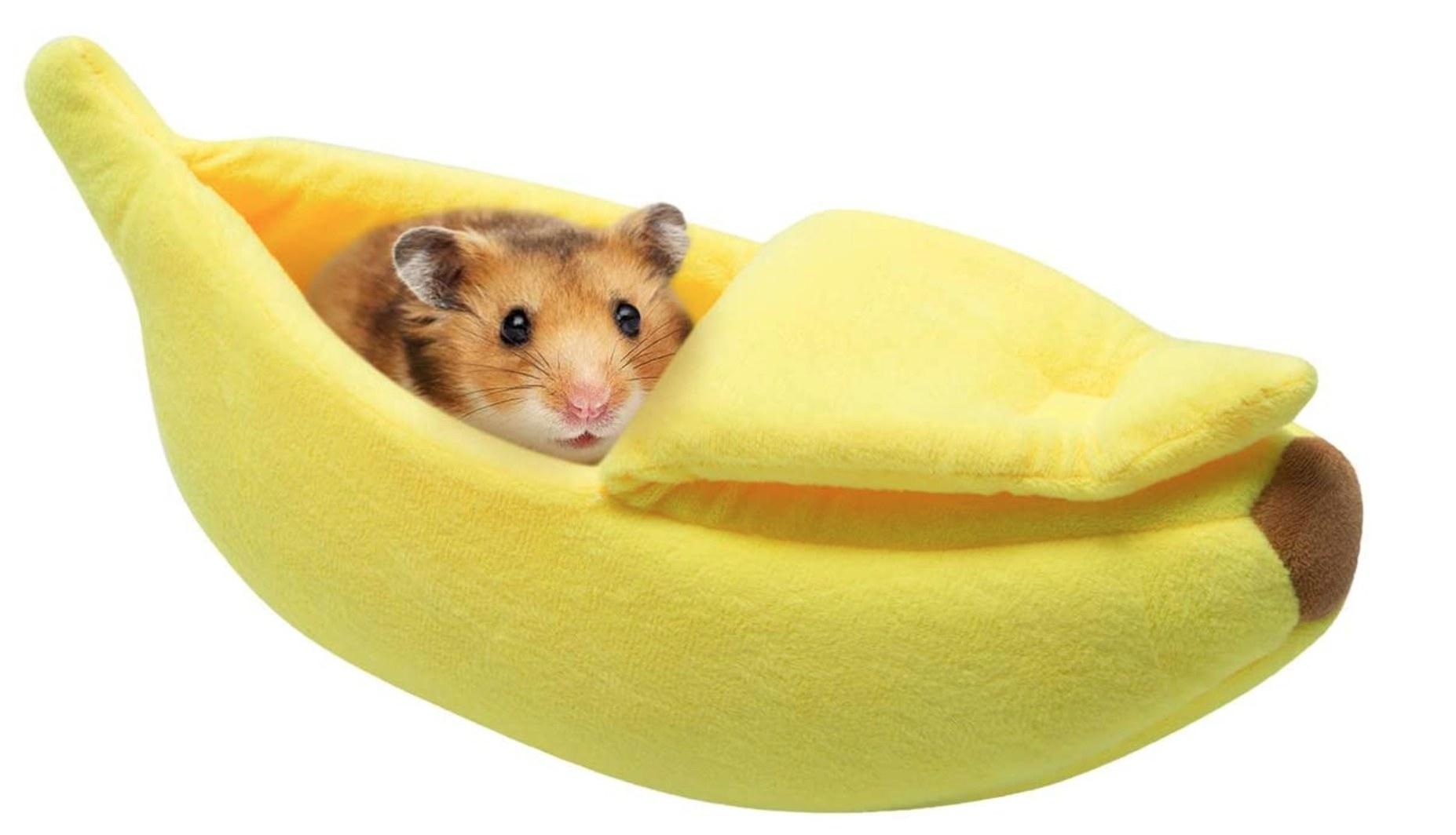 A guinea pig inside a soft yellow plush banana