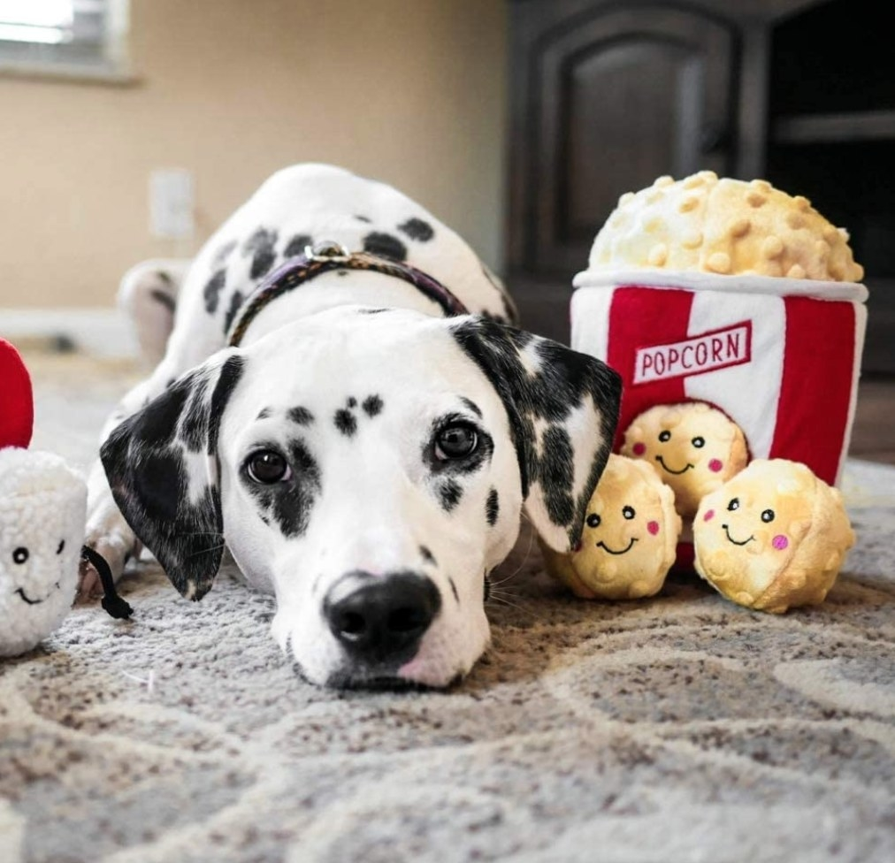 A Dalmation lying down with chew toys that look like popcorn