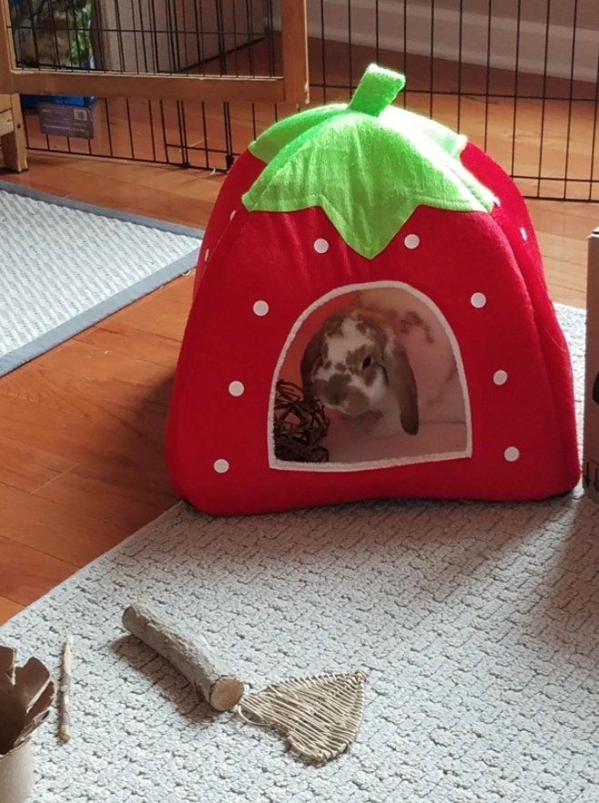 A floppy-eared rabbit sitting inside a strawberry-shaped pet cave