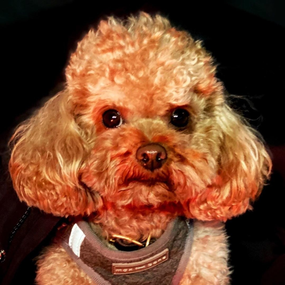 Orlando Bloom's dog