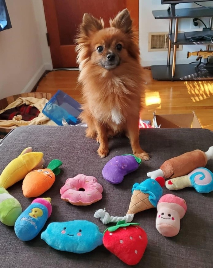 A very proud dog standing over its collection of plush pet toys