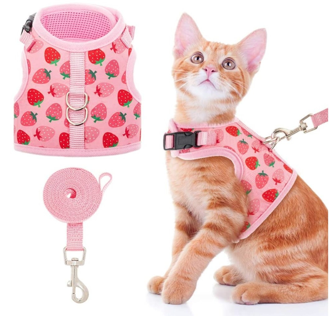 A cat wearing a pink harness with strawberry designs
