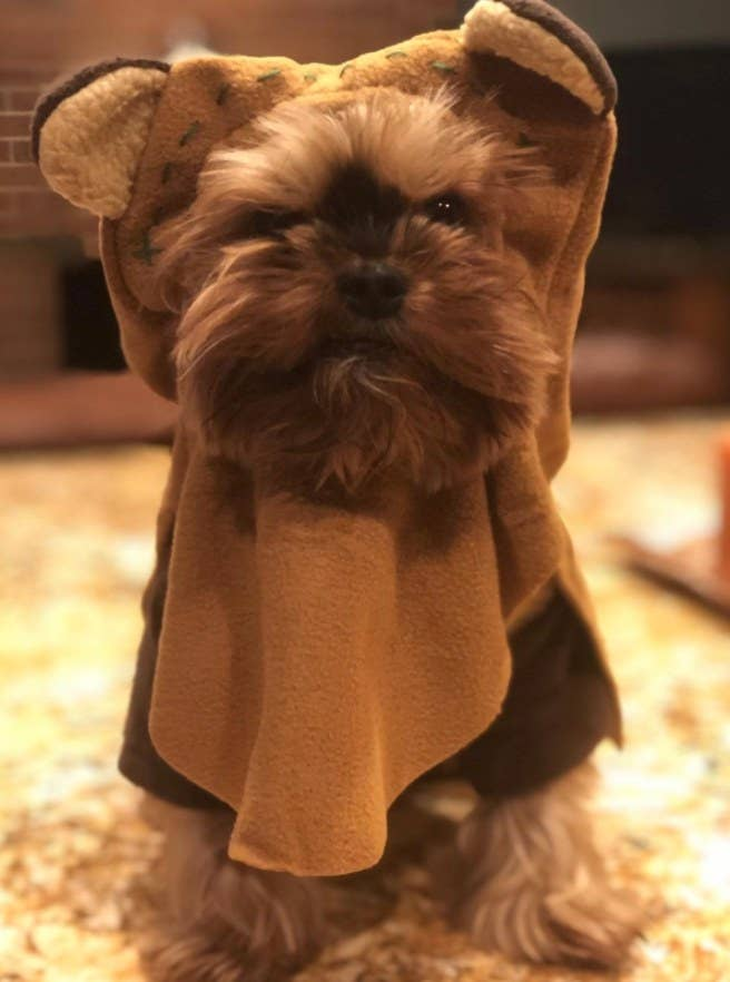Dog dressed in costume