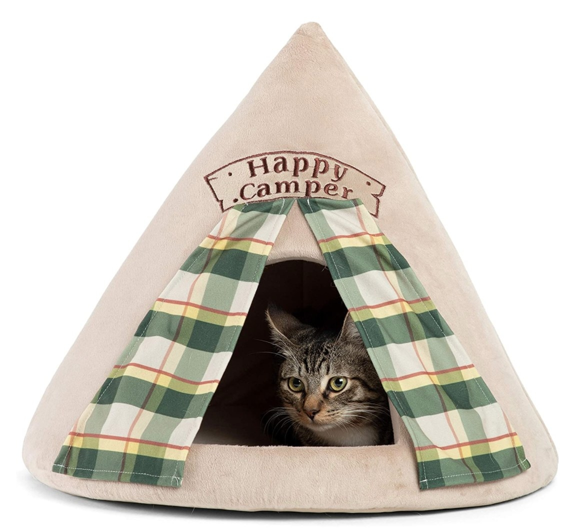 A cut sitting inside a triangular tent with plaid drapes