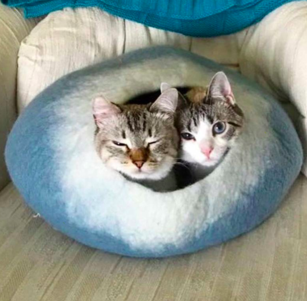 """Two striped kittens cuddle in a blue ombre """"cat cave"""" on the floor"""