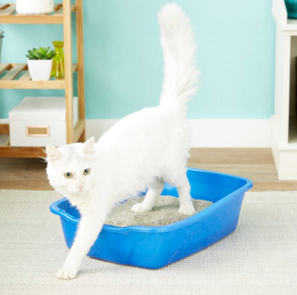 White cat steps out of blue litter box placed in a living room