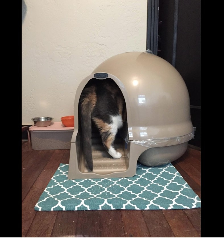 a reviewers cat head first in the dome-shaped litter box