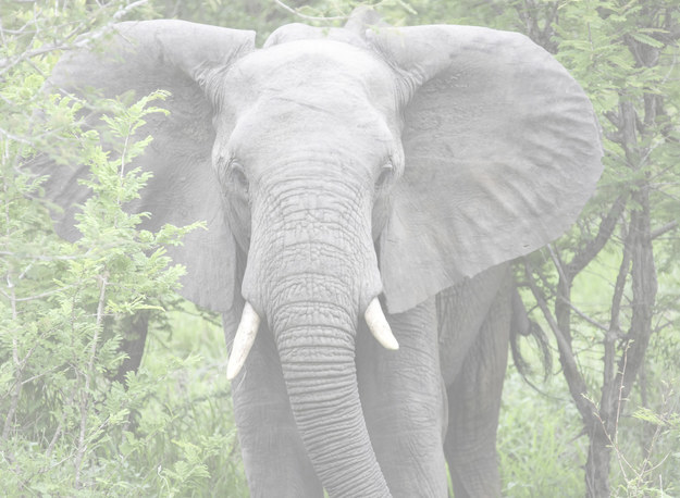 Text reads: type elephant