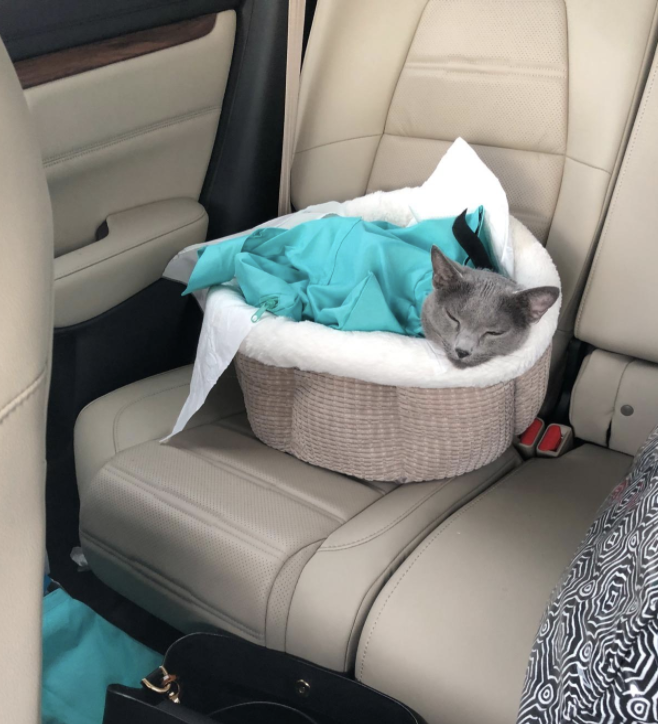 a cat sitting in the sling in a bed