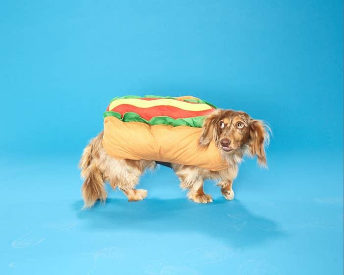 Cute dog in hot dog costume