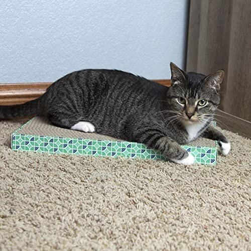 A cat sitting atop a blue and green accented scratch pad