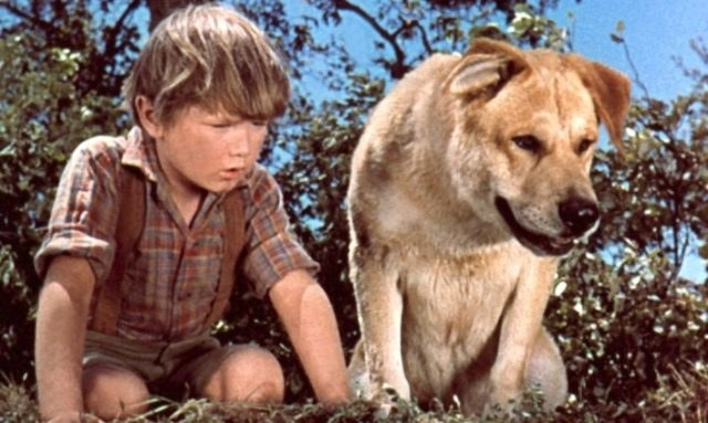 Old Yeller and a young boy look at something together