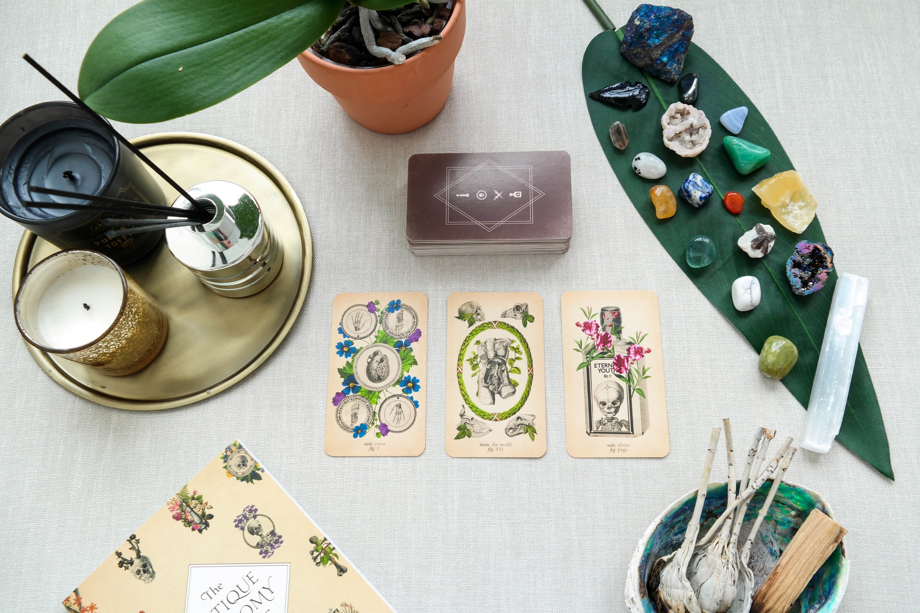 A three card spread using the Antique Anatomy deck lays out surrounded by the deck, crystals, candles, white sage and palo santo, and the guidebook on an altar