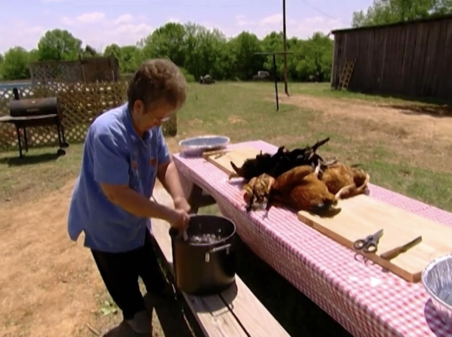 Grandma preparing fresh chickens for plucking.