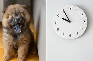 On the right, a fluffy puppy yawns, and on the right, a clock on the wall that reads 10:55