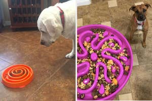 On the left, a Lab looking at an orange swirl bowl. On the right, a dog being served food from a purple floral bowl