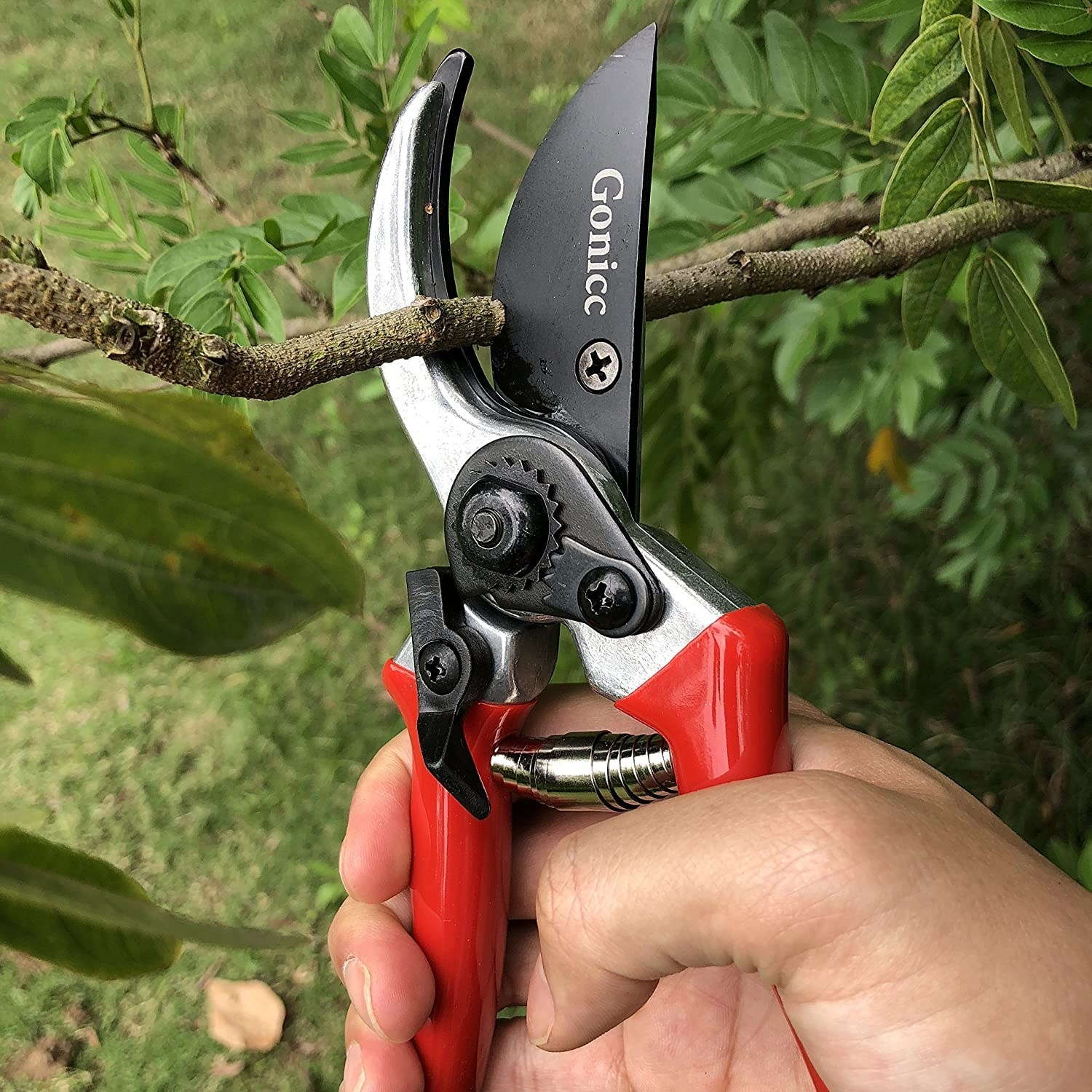 pruning sheers with a red handle