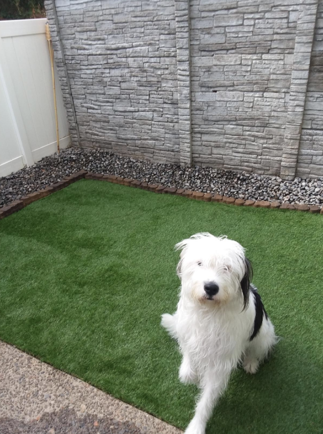a reviewer's dog sitting outside on the lush fake grass