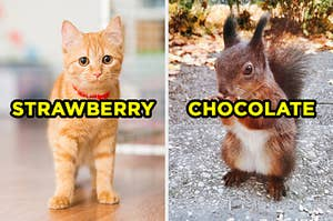 """On the left, a kitten wears a collar around its neck and """"strawberry"""" is typed on top of the image, and on the right, a fluffy squirrel stands outside and eats a nut and """"chocolate"""" is typed on top of the image"""