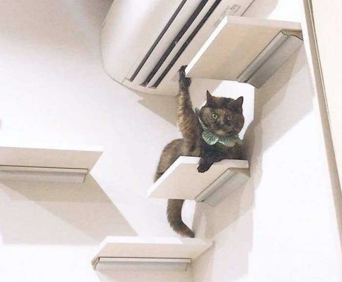 Cat with its paw in the air.