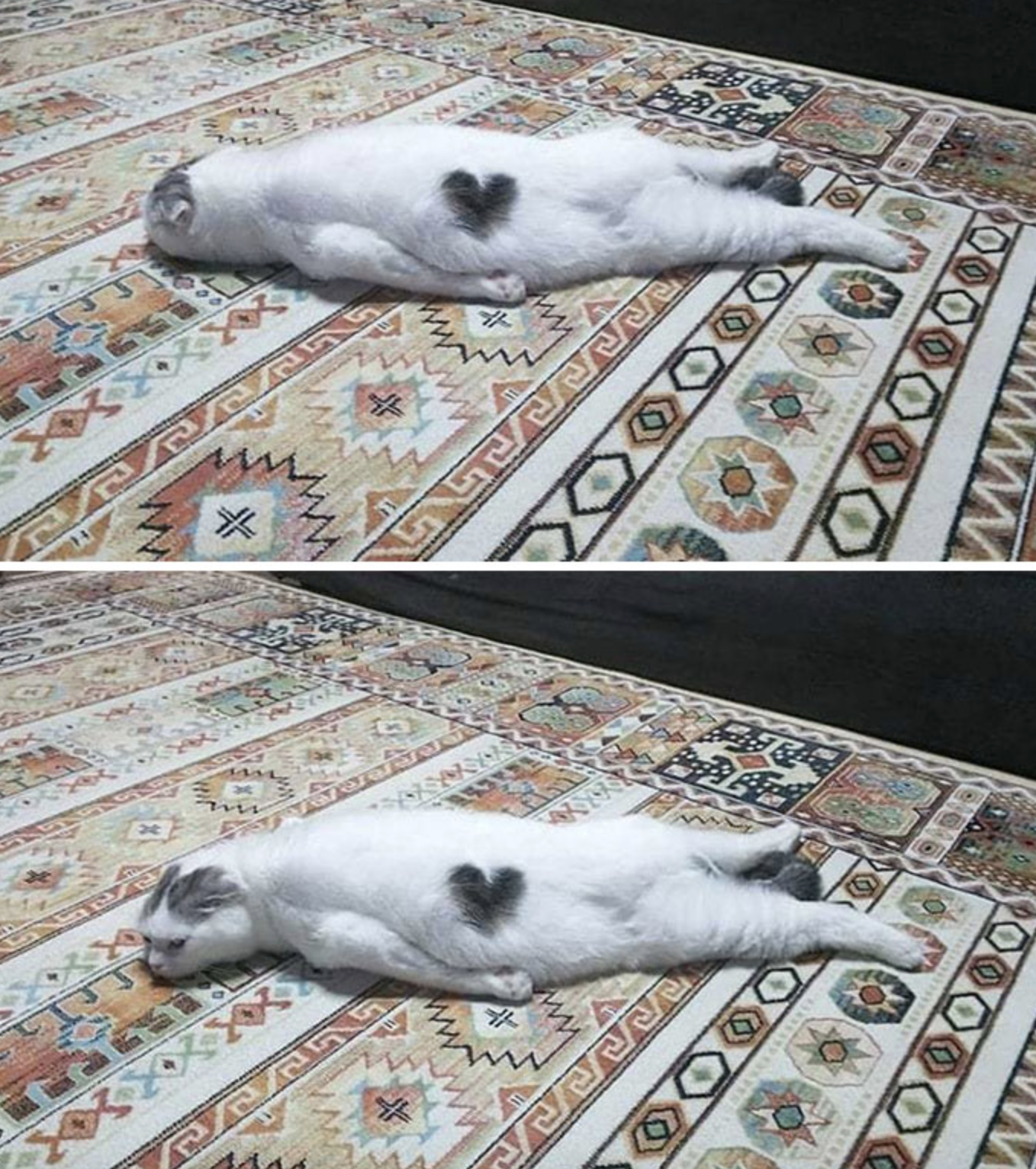 Cat laying sprawled out on the ground.