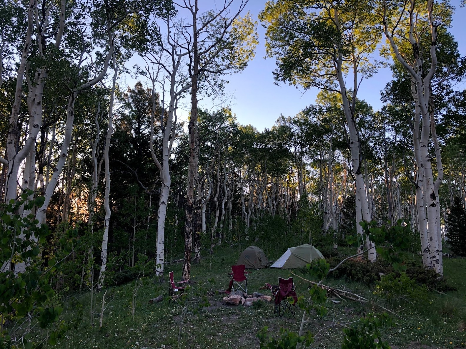 a two tents and camping chairs on a grassy patch of ground surrounded by trees