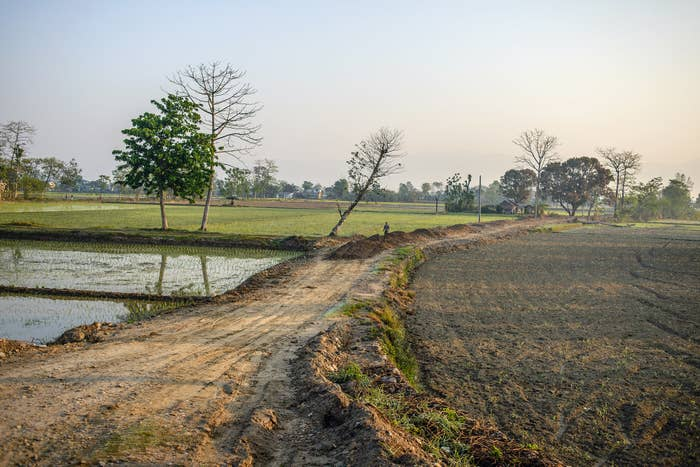 A path through rice fields in Chitwan Park, Nepal.