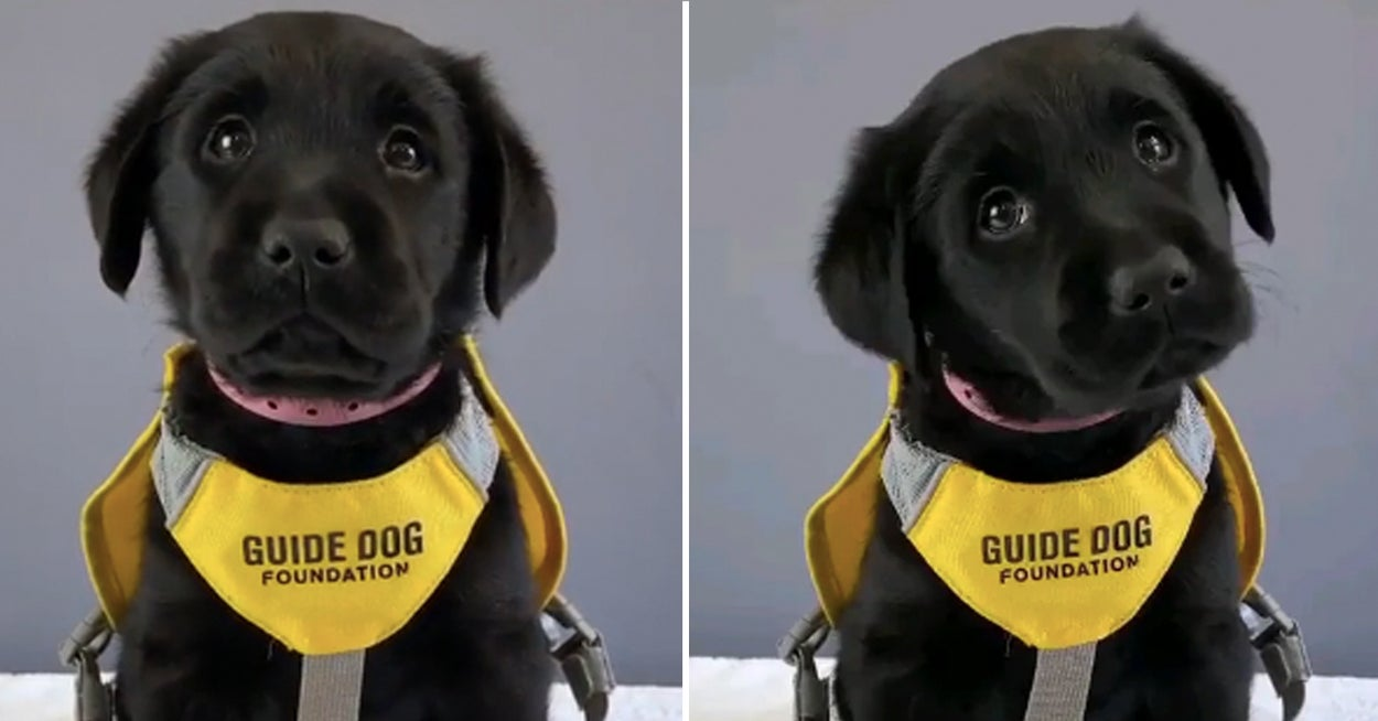 14 Of The Best Dog Posts From This Week