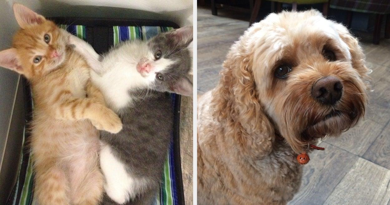 16 Heartwarming Pet Adoption Stories From TikTok